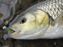 Baitcasting-Fischen in Mitteleuropa stockbilder