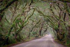 Baixa estrada secundária, South Carolina imagens de stock royalty free