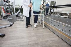 Baixa seção do caminhante de Assisting Woman With do fisioterapeuta Imagem de Stock