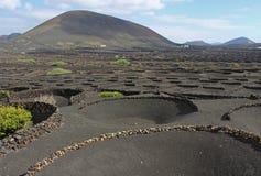 Baixas paredes drystone semicirculares na região vinho-crescente de Espanha das Ilhas Canárias de Geria Lanzarote do La foto de stock royalty free