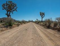 Baixo ângulo da estrada do deserto através de Joshua Trees Fotografia de Stock