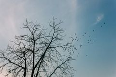 Baixo ângulo das silhuetas de pássaros de voo com árvore imagem de stock