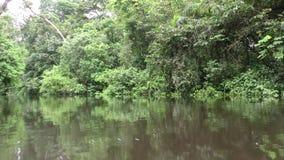 Baixo ângulo disparado de barco movente da vegetação densa na selva do Amazonas filme