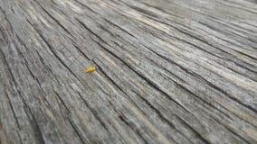 Baixo contraste da textura de madeira dura Fotografia de Stock