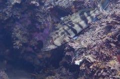 Baixo da alga Fotos de Stock Royalty Free