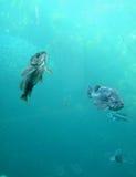 Baixo de mar Imagem de Stock