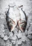 Baixo de mar no gelo Imagens de Stock Royalty Free