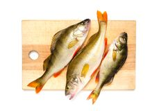 Baixo do rio na placa de corte Peixes predatórios em um fundo branco Imagens de Stock