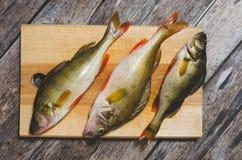 Baixo do rio na placa de corte Peixes predatórios em um fundo de madeira Fotografia de Stock