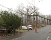 Baixo furacão Sandy da árvore fotos de stock