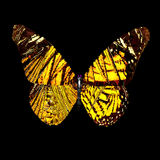 Baixo geométrico poli da borboleta Imagens de Stock