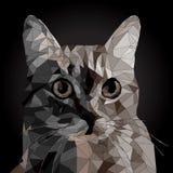 Baixo retrato poli do vetor de um gato fresco ilustração royalty free