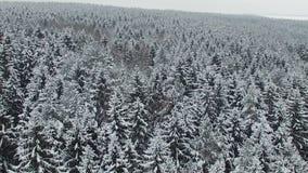 Baixo voo acima da floresta do inverno na vista norte, aérea vídeos de arquivo