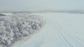 Baixo voo da vista aérea sobre a floresta nevado do abeto vermelho no inverno Floresta do pinho do tiro aéreo grande coberta com  video estoque