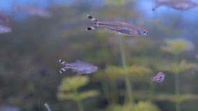 Bajío de pequeños pescados coloridos que nadan en acuario enorme almacen de metraje de vídeo
