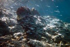 Bajío de pescados Imagen de archivo libre de regalías