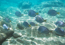 Bajío de pescados Imágenes de archivo libres de regalías