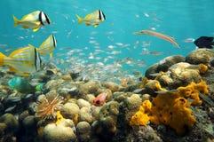 Bajío de pescados en un arrecife de coral bajo Fotografía de archivo