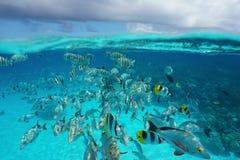 Bajío de pescados tropicales subacuáticos con el cielo nublado Imagenes de archivo