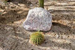 Baja california cactus close up Stock Photo