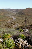 Baja desert I. Landscape of the desert of the mexican state of baja california Royalty Free Stock Photography