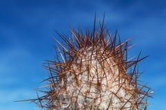 baja kaktusowy California szczegół Mexico Obraz Stock