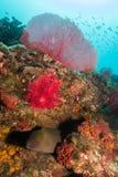Baja Reef Stock Photography