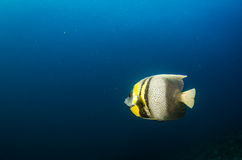 Baja Reef Royalty Free Stock Images