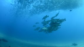 Baja Reef stock footage
