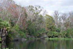 Baje el parque de estado del río de Wekiva, la Florida, los E.E.U.U. Fotos de archivo