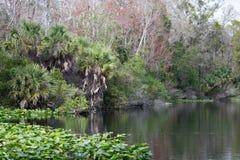 Baje el parque de estado del río de Wekiva, la Florida, los E.E.U.U. Fotografía de archivo libre de regalías