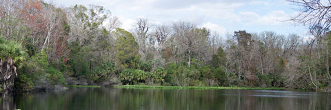 Baje el parque de estado del río de Wekiva, la Florida, los E.E.U.U. Imagen de archivo libre de regalías