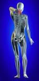 Baje la espina dorsal ilustración del vector