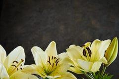 Baje la frontera de los lirios de día amarillos limón frescos Foto de archivo