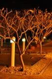 Bajecznie drzewa Obrazy Stock