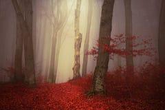 Bajka mgłowy las obraz stock