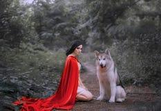 Bajka o czerwonej nakrętce, ciemnowłosa dziewczyna na ziemi w gęstym lesie w krótkiej światło białe sukni, długa szkarłatna peler obraz royalty free