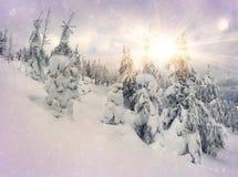 Bajka opad śniegu w zima lesie Fotografia Stock