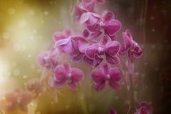 Bajka stylu menchii orchidei kwiaty Zdjęcia Stock
