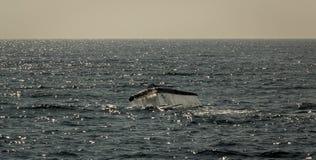 Bajka wieloryb Zdjęcia Stock