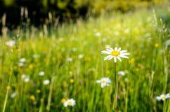 Bajki łąka Zdjęcia Royalty Free