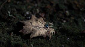 Bajki Dragonfly Zdjęcie Royalty Free