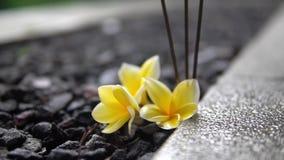 Bajo-ángulo, endecha amarilla de las flores del primer en el piso de piedra en la terraza al aire libre almacen de metraje de vídeo