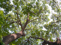 Bajo árbol verde grande Hermoso enorme de extensión Fotos de archivo libres de regalías