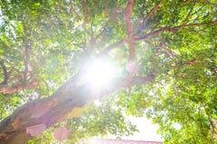 Bajo día brillante soleado del árbol y del verano Fotos de archivo