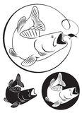 Bajo de los pescados Imagen de archivo libre de regalías