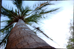 Bajo el árbol de coco Fotografía de archivo