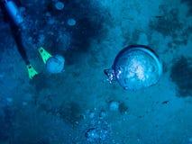 Bajo el mundo del agua en Maldives foto de archivo libre de regalías