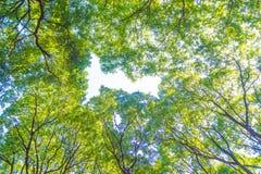 Bajo imagen verde de la hoja para el fondo o la idea diseñe Imágenes de archivo libres de regalías
