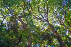 Bajo imagen verde de la hoja para el fondo o la idea diseñe Fotos de archivo